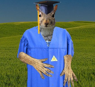 Admissions Decides to Accept Squirrels to Dickinson Class of 2020
