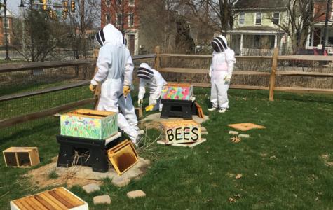 Adoptable Bees Cause a Buzz